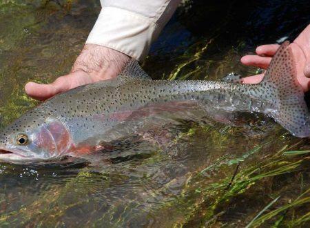 Pescare alla trota in base al periodo