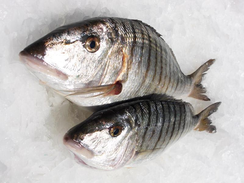 trucchi consigli e segreti per pescare le mormore