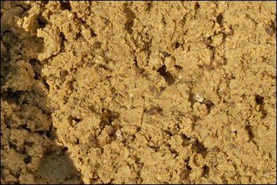 Ricetta pastura alla sarda per spigola
