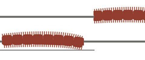 Come innescare correttamente l arenicola